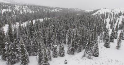 4K Aerial Alaska Forest Stock Footage