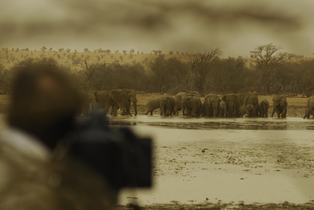 Cameraman Richard kirby filming Desert Elephants