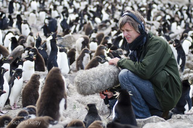 Our Producer, Colin Collis recording the pandemonium in a rock hopper penguin colony