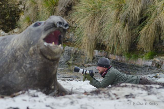 An Elephant seal disagrees with Anthony's view on best aperture