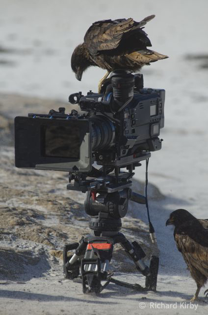 My camera assistant and focus puller, the Caracaras