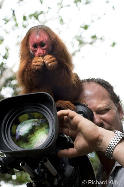 4Red Uakari Monkey, A swamp forest specialist and camera assistant